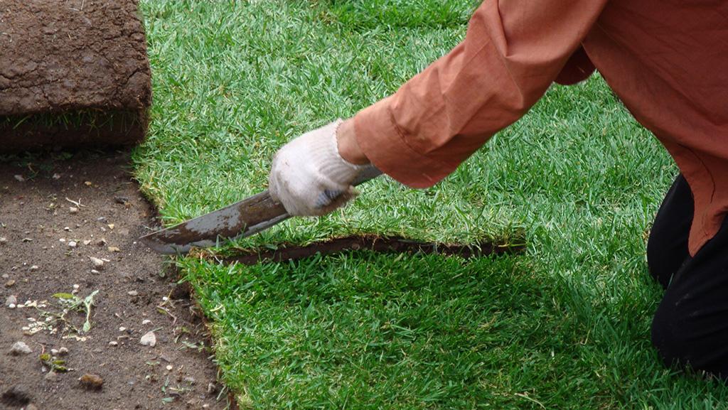 уборка газона